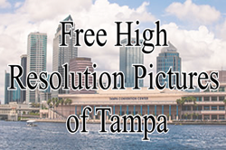Royalty free pictures of tampa